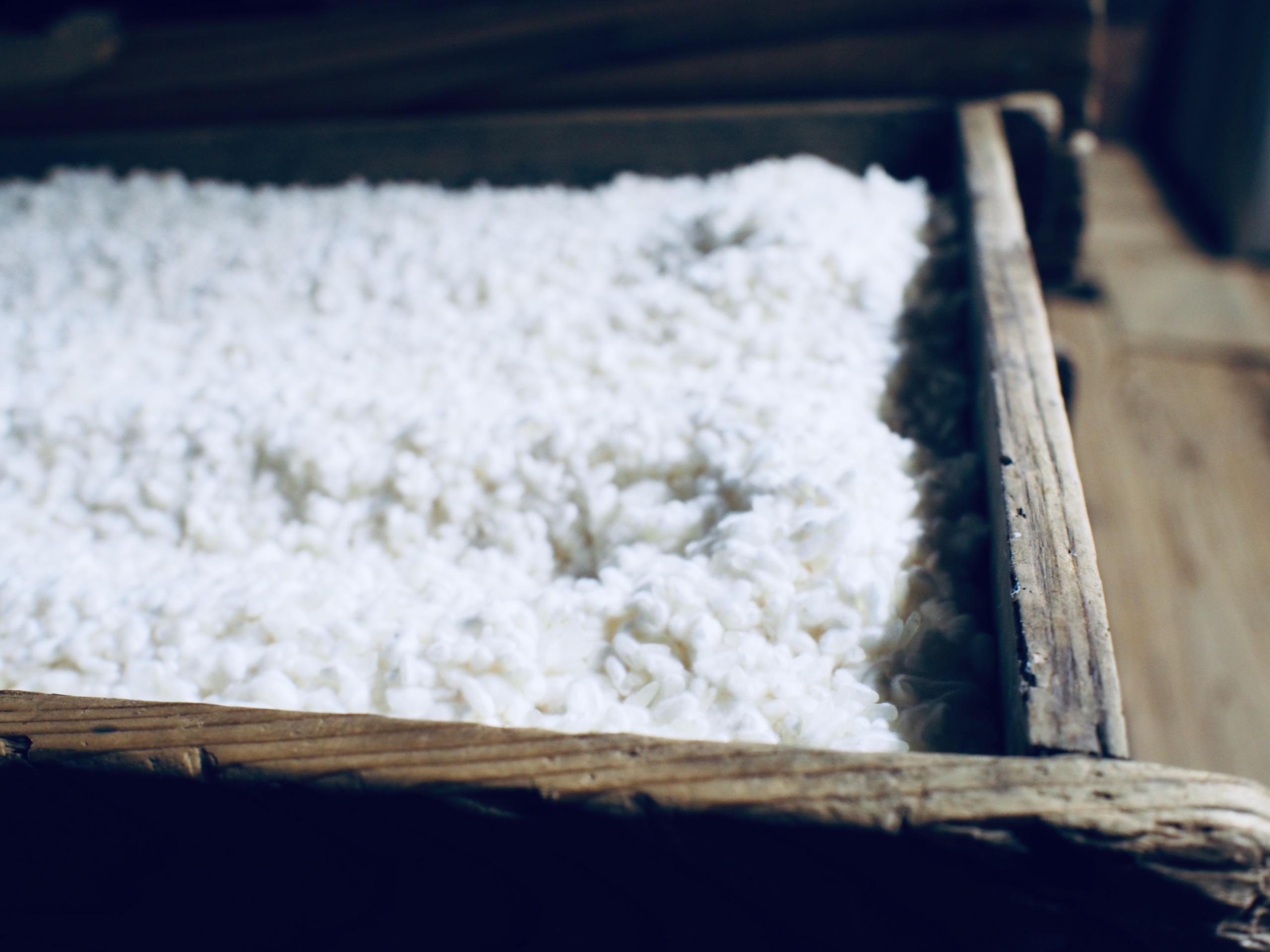 味噌や醤油に欠かせない麹も微生物。